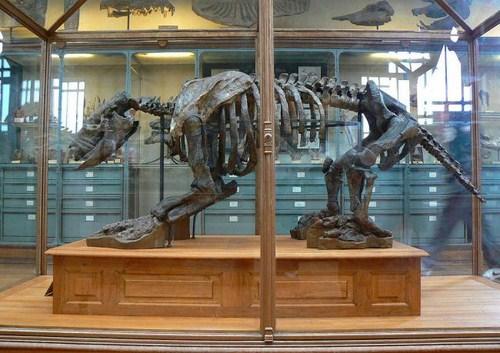 Museo Aragones de Paleontologia
