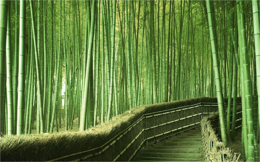 Gran-bosque-de-bambú